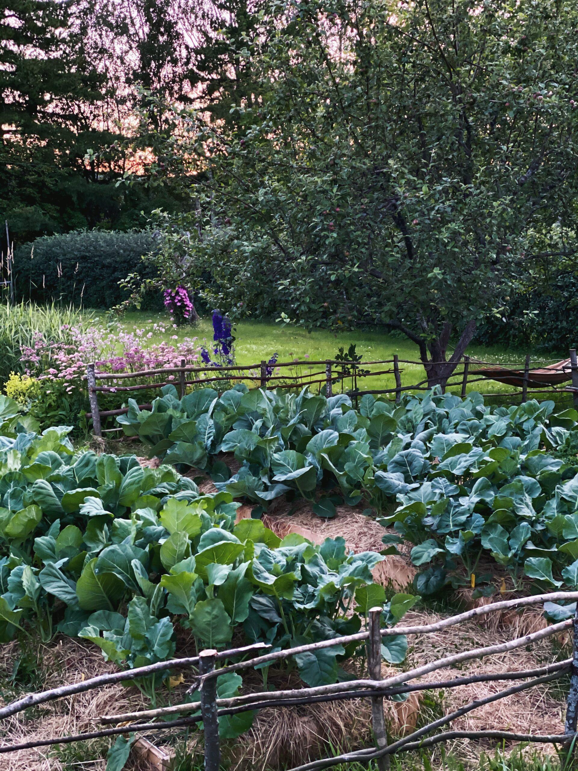 Framtidens trädgårdsmelodi?